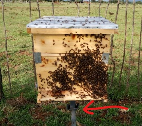 Moat under hive keeps ants away
