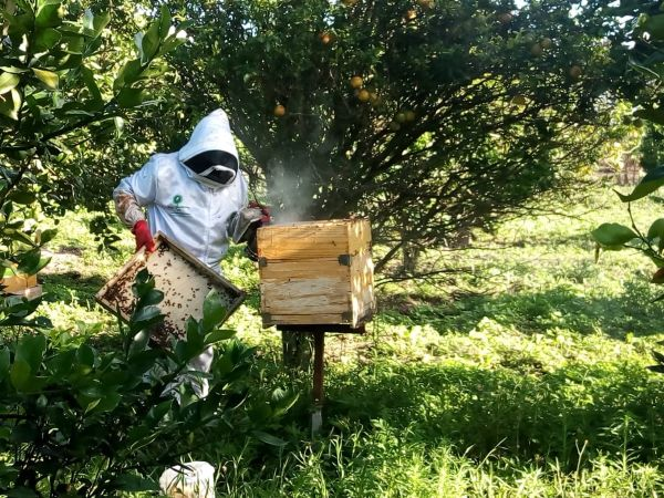 Placing beehives under natural shade under a fruit tree