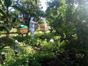minimize your beekeeping expenses doing it yourself