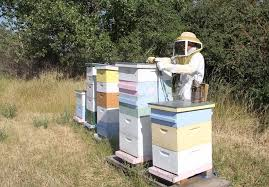 adding supers can increase honey harvest