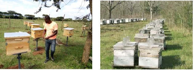 small scale vs large scale beekeeping